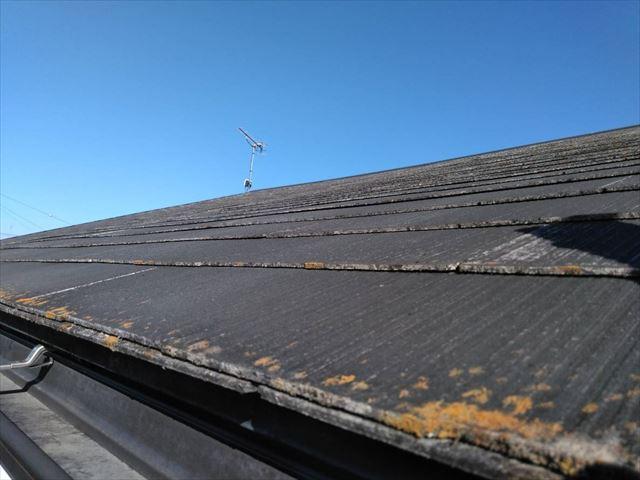 屋根の先端にカビが生えている