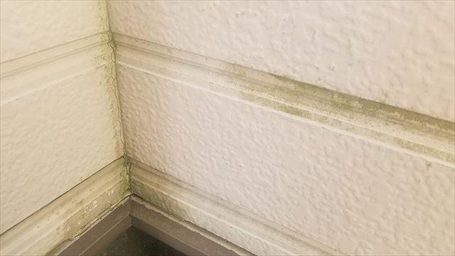 外壁に苔発生