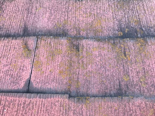 屋根にカビが発生しています