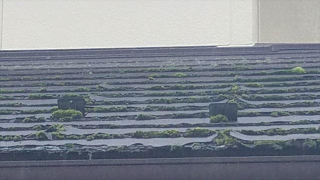 カビ、苔の生えた屋根
