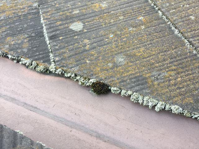 屋根にカビやコケが発生