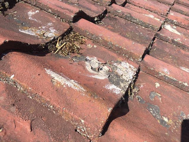 セメント瓦の汚物付着